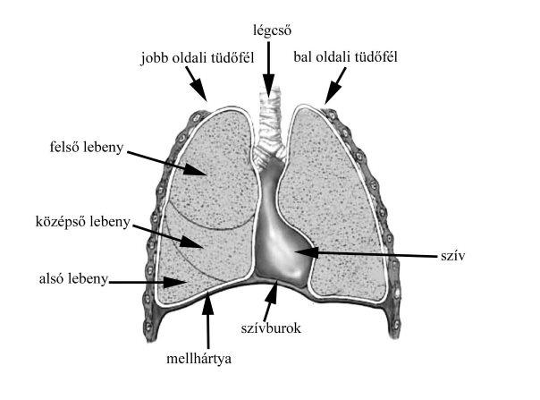 tachycardia és visszér