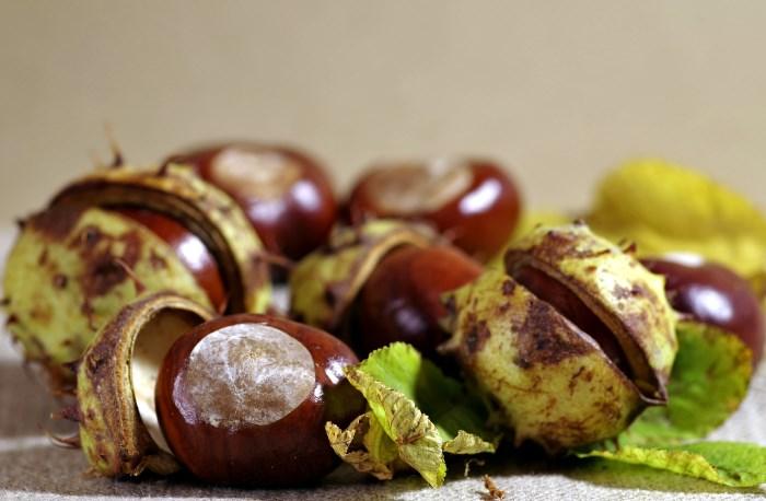 recept a visszérre a gesztenye gyümölcséből