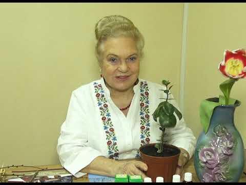 Natalya Zemna visszér, Fogyni szén tabletta vélemények