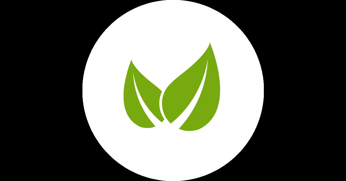 Csalán, a tisztító gyógynövény - Egészségtér