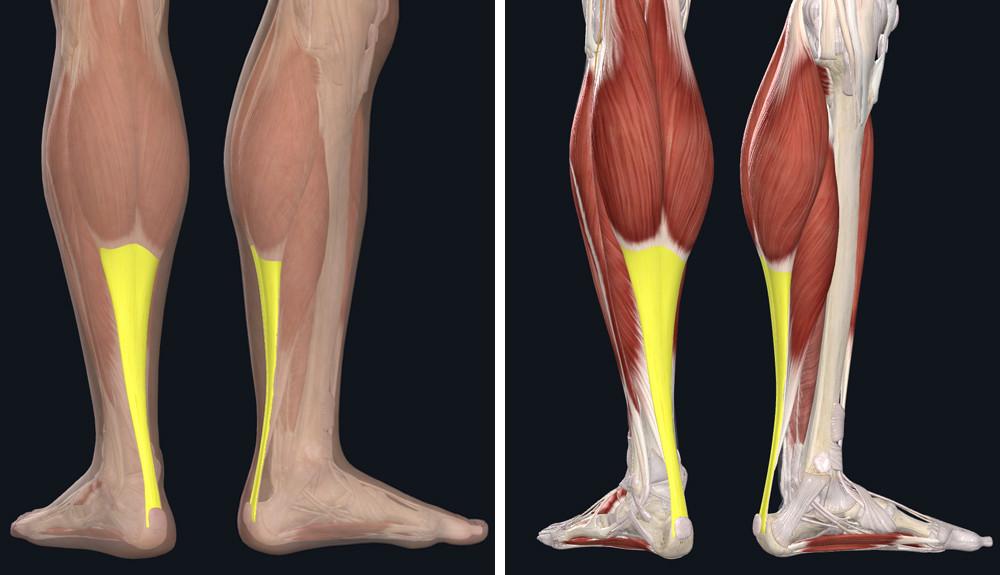 hol kell bekenni a lábát visszérrel lábak visszér komplex