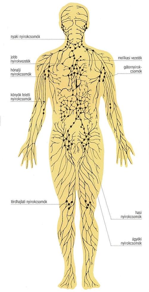 A visszerek, nyirokerek és nyirokcsomók máshol nem osztályozott betegségei (II89) - Neurology